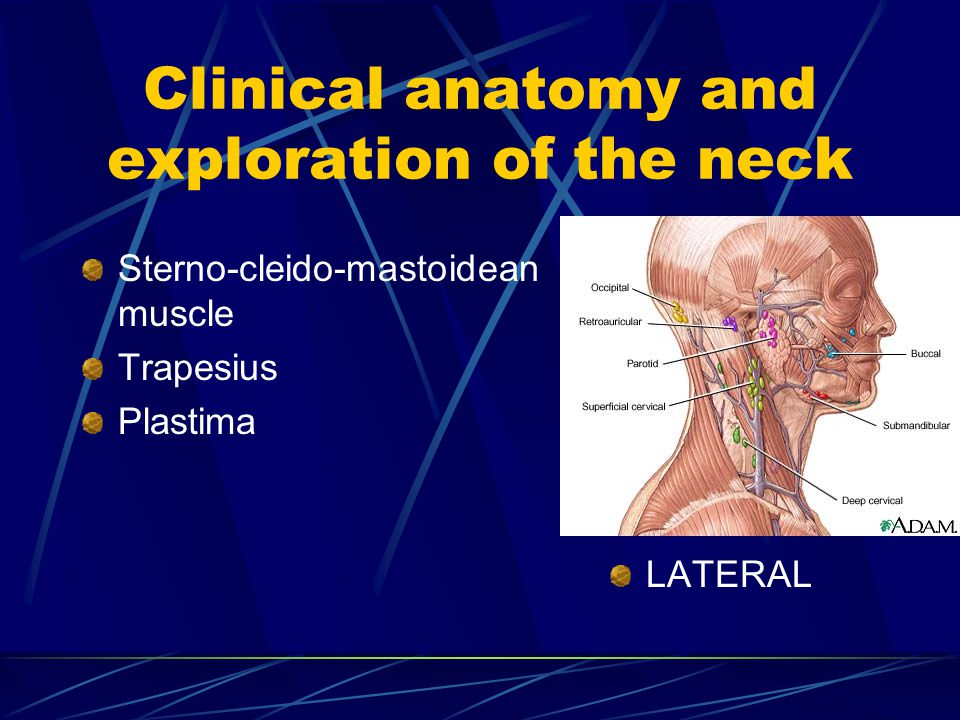 Clinical anatomy and exploration of the neck
