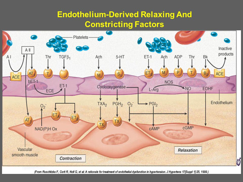 Endothelium-Derived Relaxing And Constricting Factors