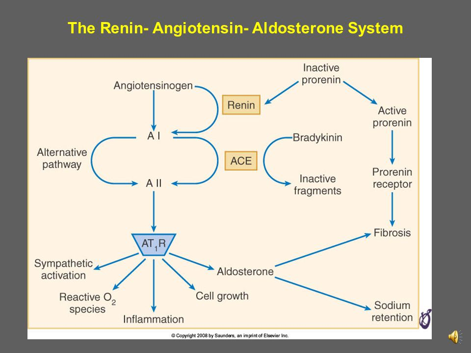 The Renin- Angiotensin- Aldosterone System