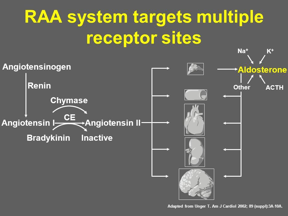 RAA system targets multiple receptor sites