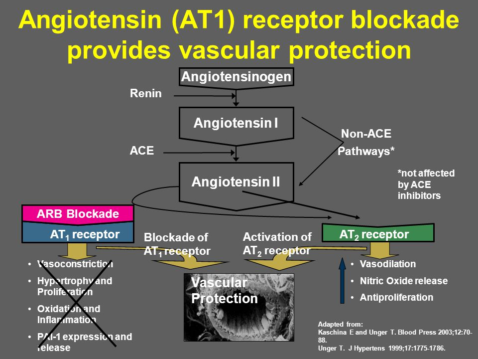 Angiotensin (AT1) receptor blockade provides vascular protection