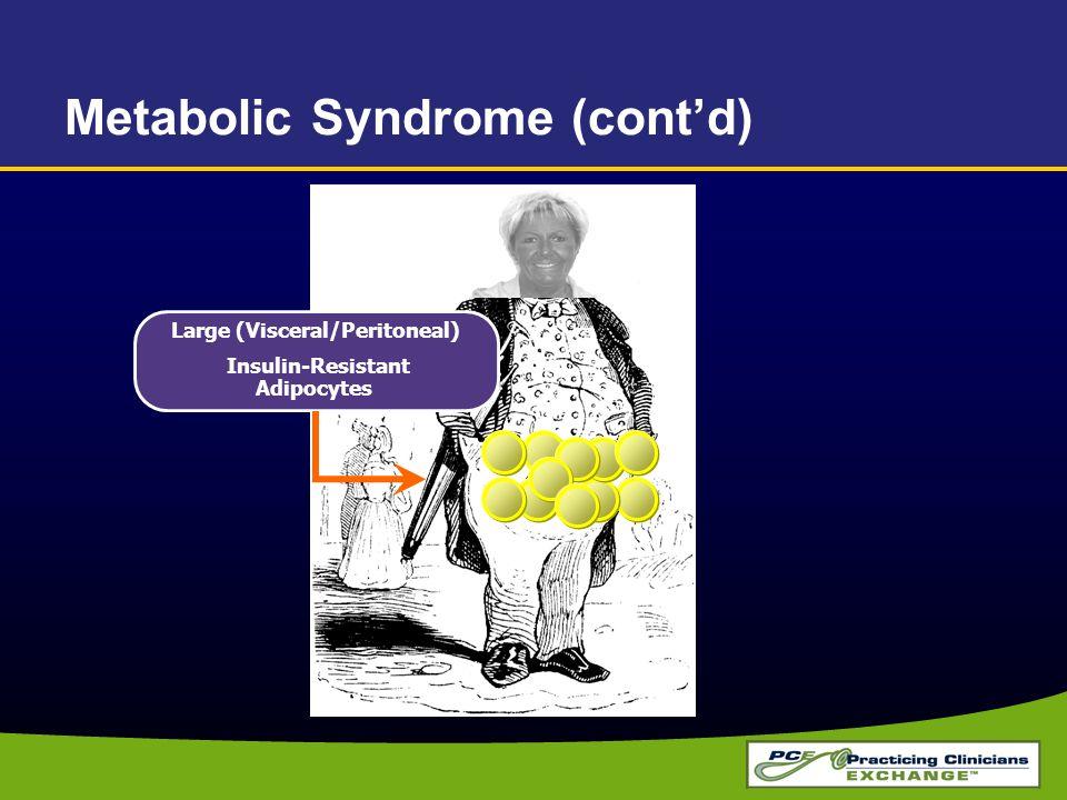 Large (Visceral/Peritoneal) Insulin-Resistant Adipocytes