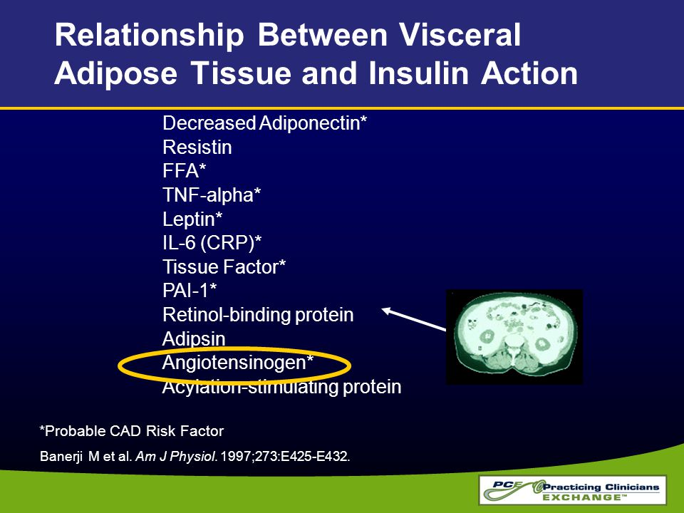 Relationship Between Visceral Adipose Tissue and Insulin Action