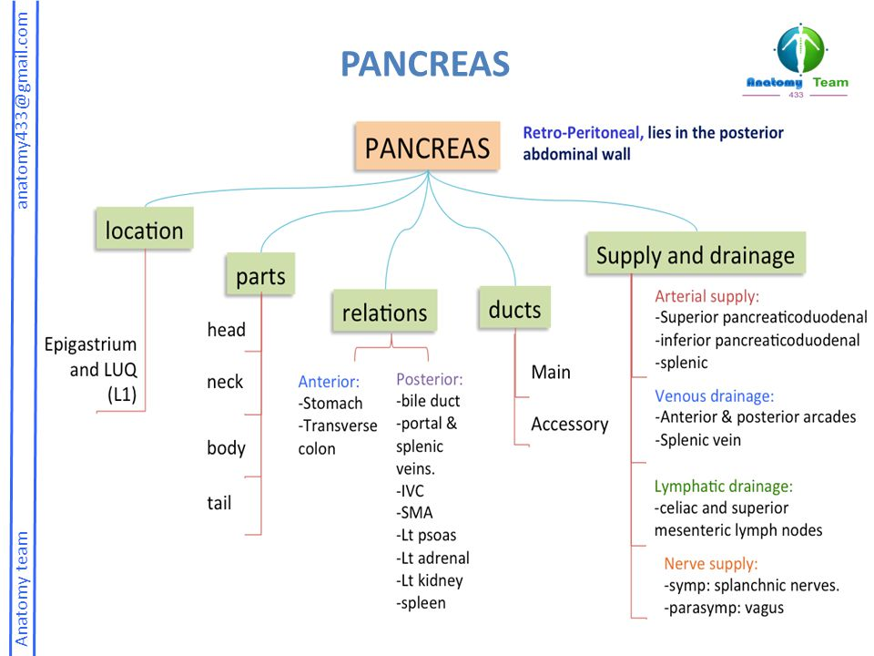 PANCREAS Anatomy team anatomy433@gmail.com.