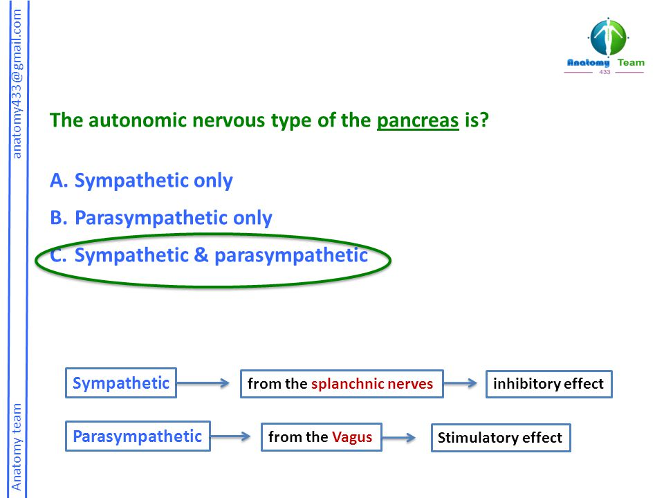 The autonomic nervous type of the pancreas is Sympathetic only