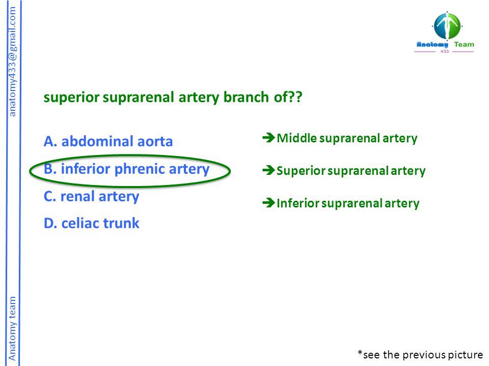 superior suprarenal artery branch of A. abdominal aorta