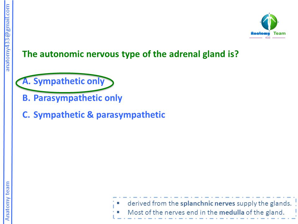 The autonomic nervous type of the adrenal gland is Sympathetic only