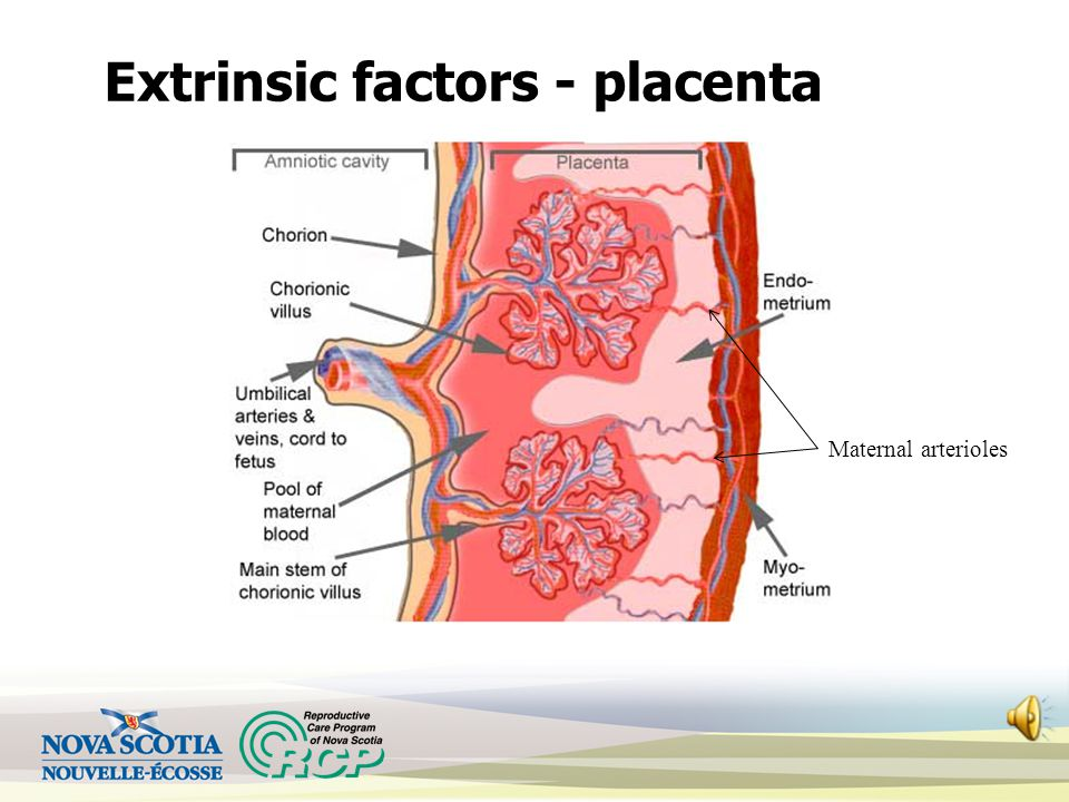 Extrinsic factors - placenta