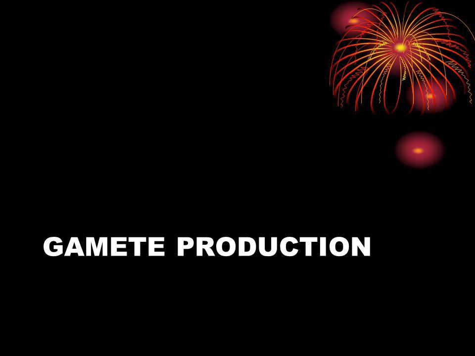 Gamete Production