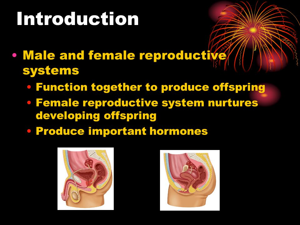 Introduction Male and female reproductive systems
