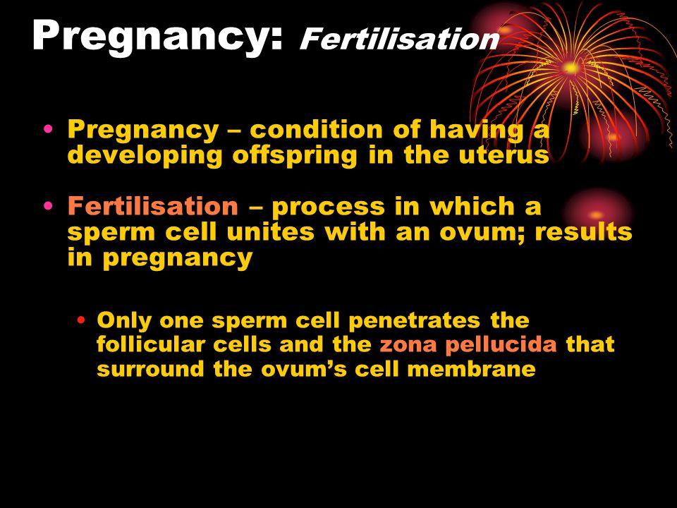 Pregnancy: Fertilisation