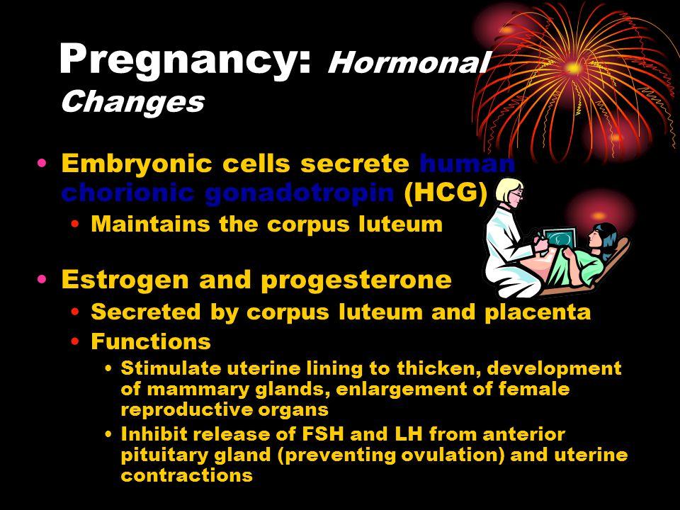 Pregnancy: Hormonal Changes