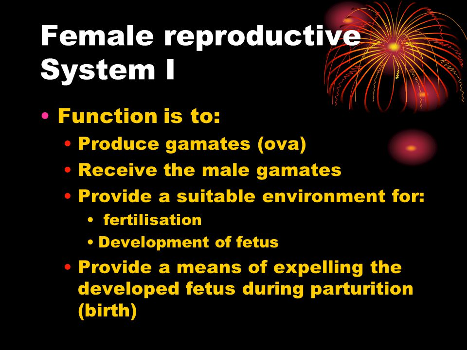 Female reproductive System I