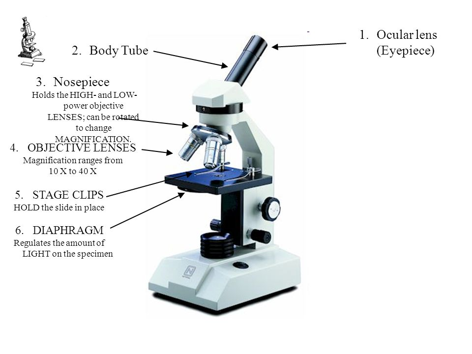 Ocular lens (Eyepiece) Body Tube
