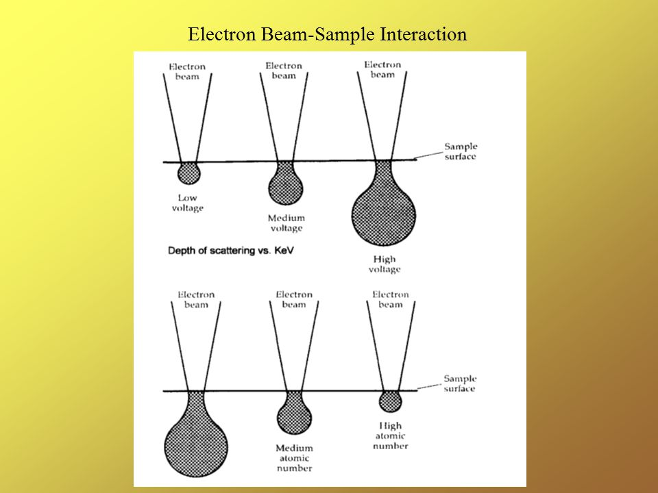 Electron Beam-Sample Interaction
