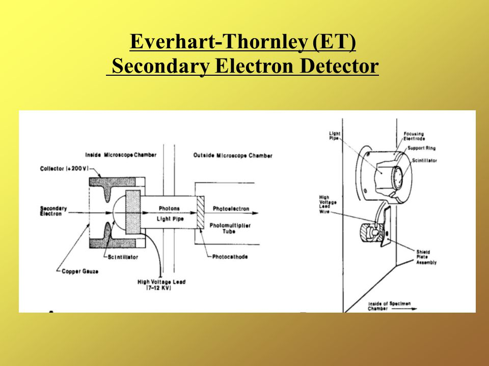 Everhart-Thornley (ET) Secondary Electron Detector