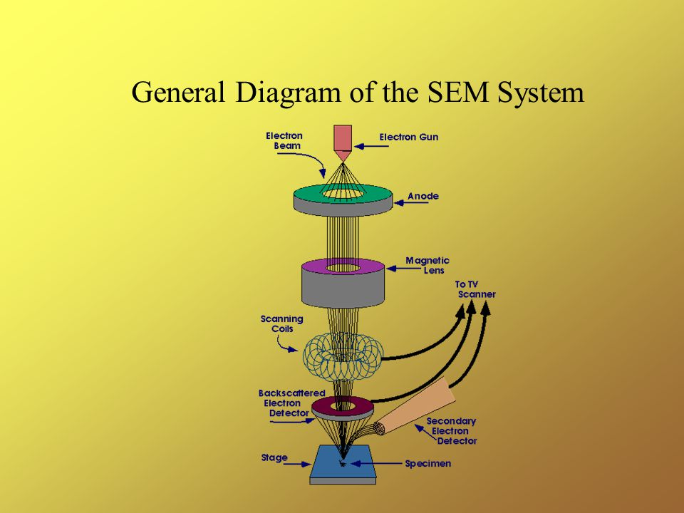 General Diagram of the SEM System