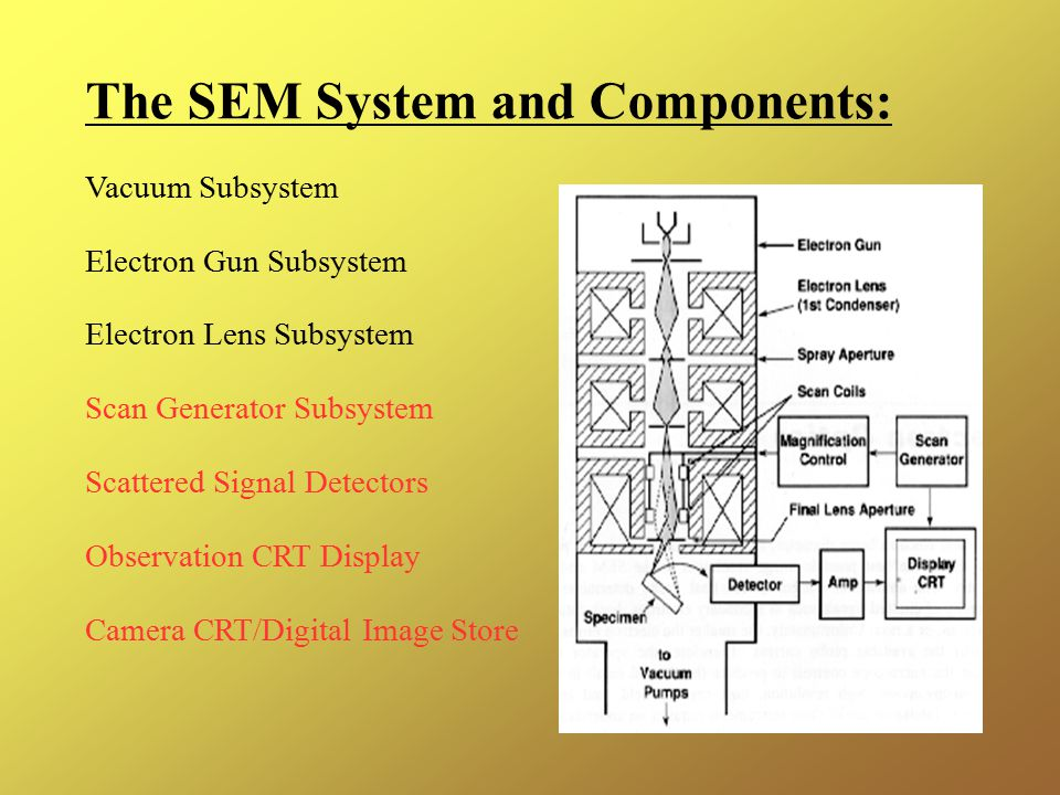 The SEM System and Components: