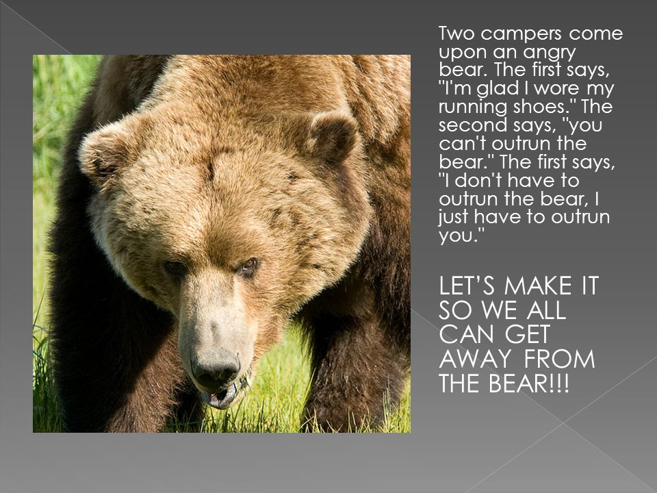 Two campers come upon an angry bear