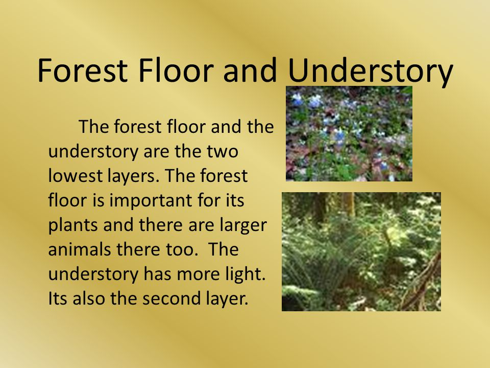 Forest Floor and Understory