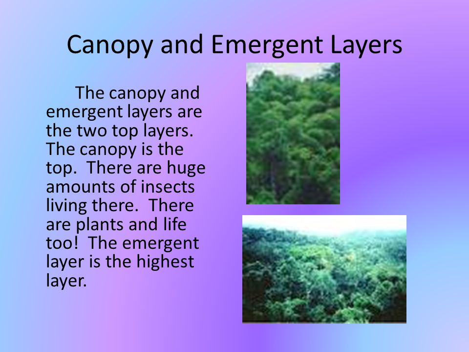 Canopy and Emergent Layers