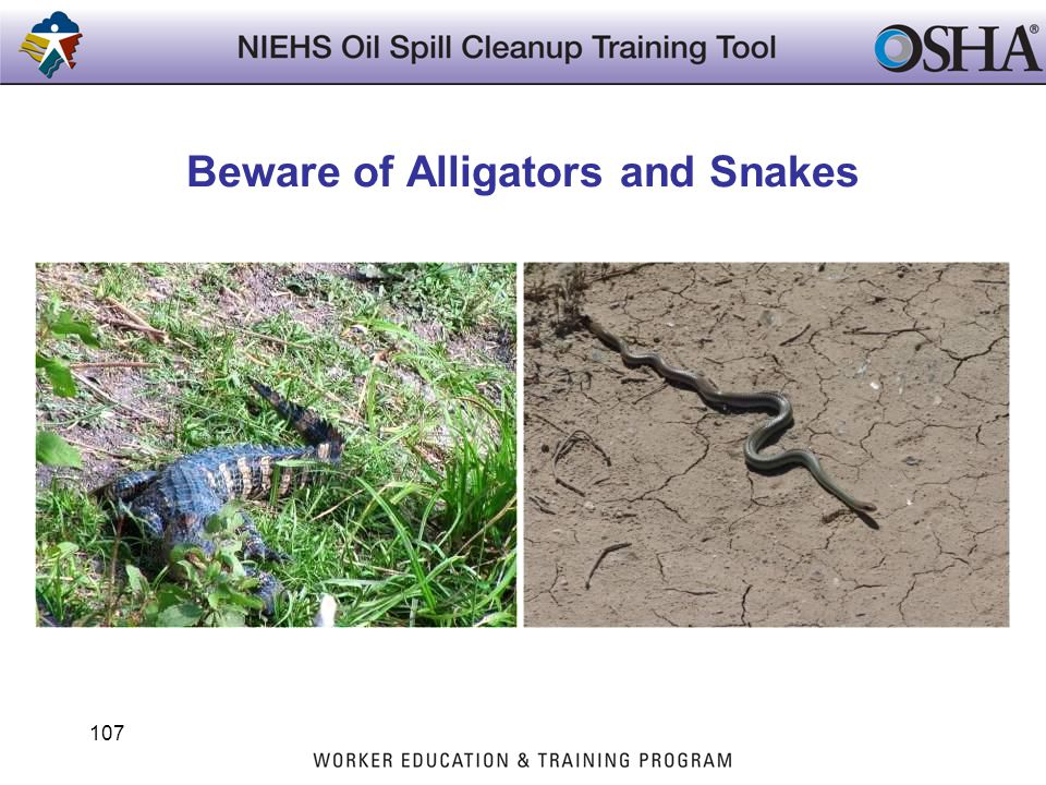 Beware of Alligators and Snakes