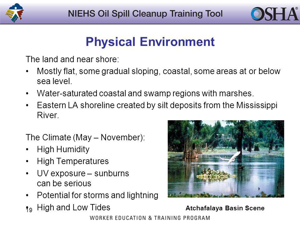Physical Environment Atchafalaya Basin Scene The land and near shore: