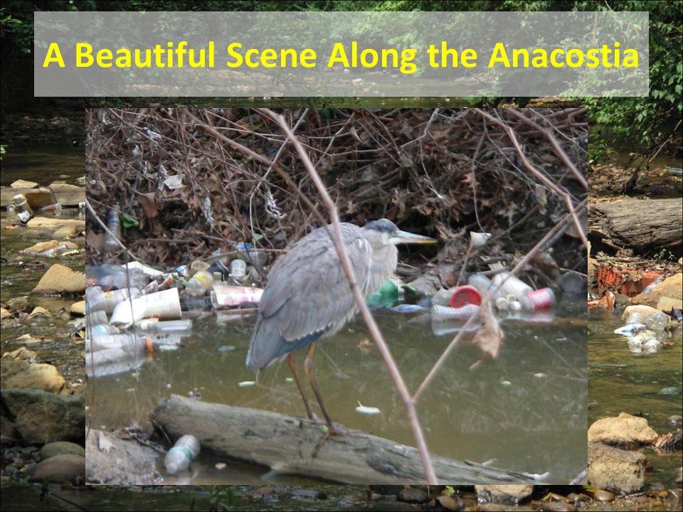 A Beautiful Scene Along the Anacostia