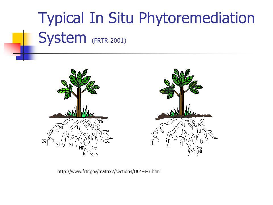 Typical In Situ Phytoremediation System (FRTR 2001)