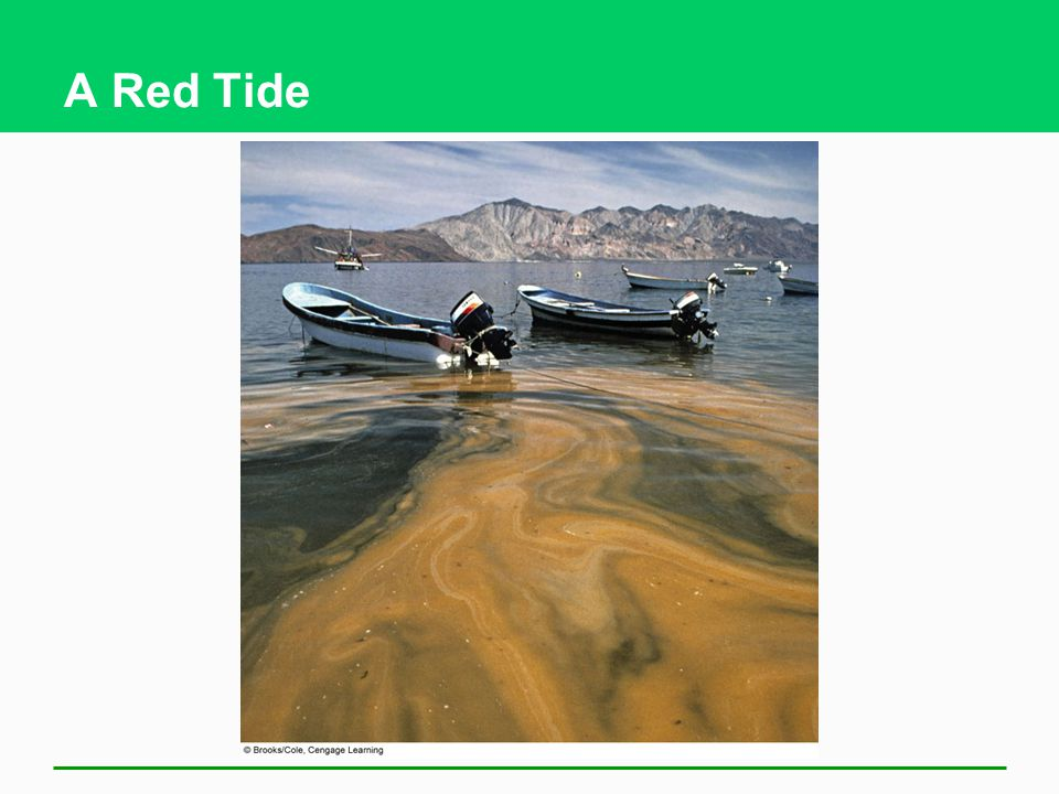 A Red Tide