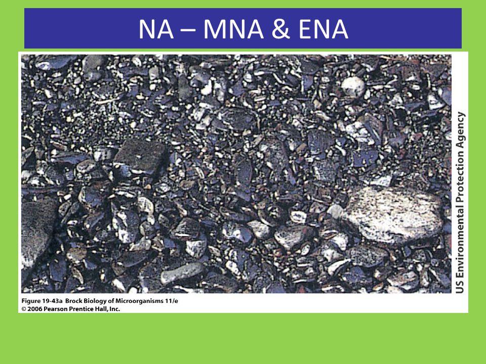 NA – MNA & ENA