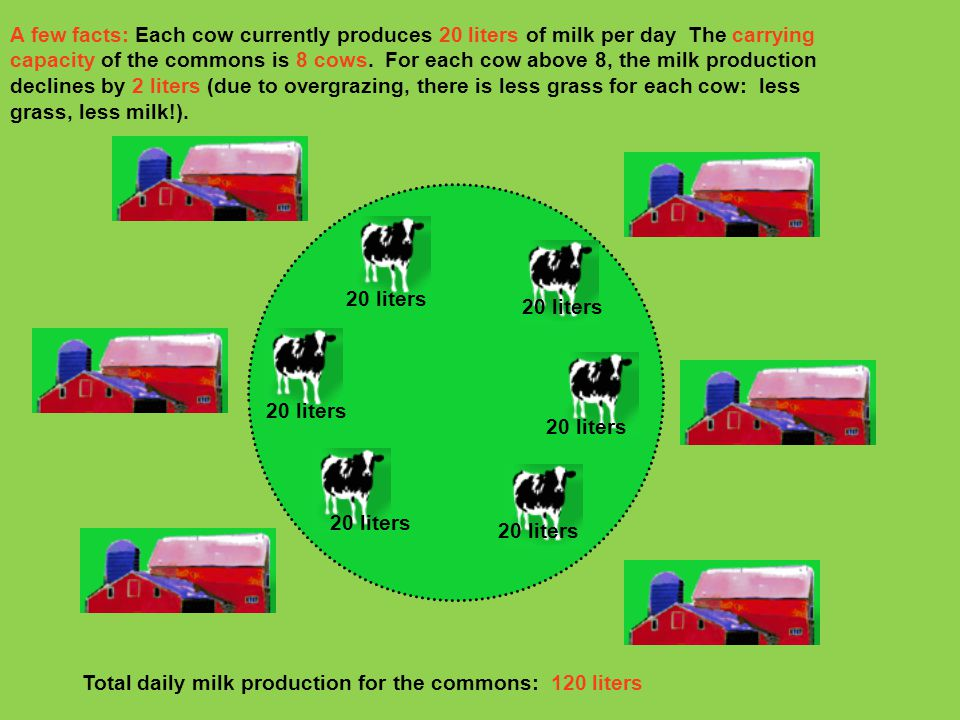 A few facts: Each cow currently produces 20 liters of milk per day The carrying capacity of the commons is 8 cows. For each cow above 8, the milk production declines by 2 liters (due to overgrazing, there is less grass for each cow: less grass, less milk!).