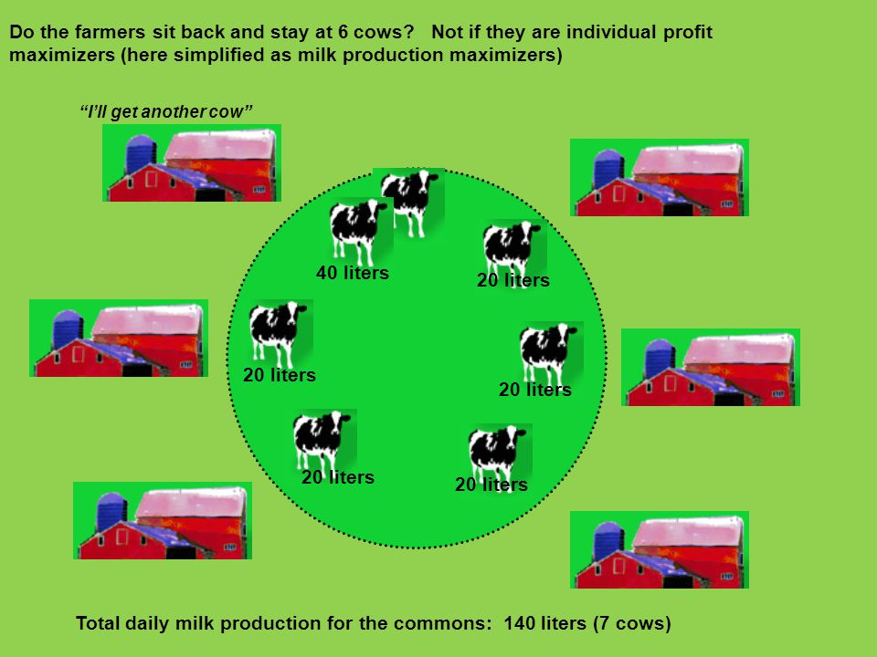 Total daily milk production for the commons: 140 liters (7 cows)