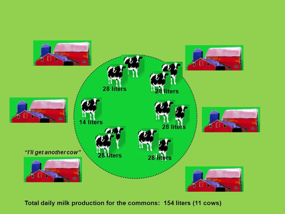 Total daily milk production for the commons: 154 liters (11 cows)