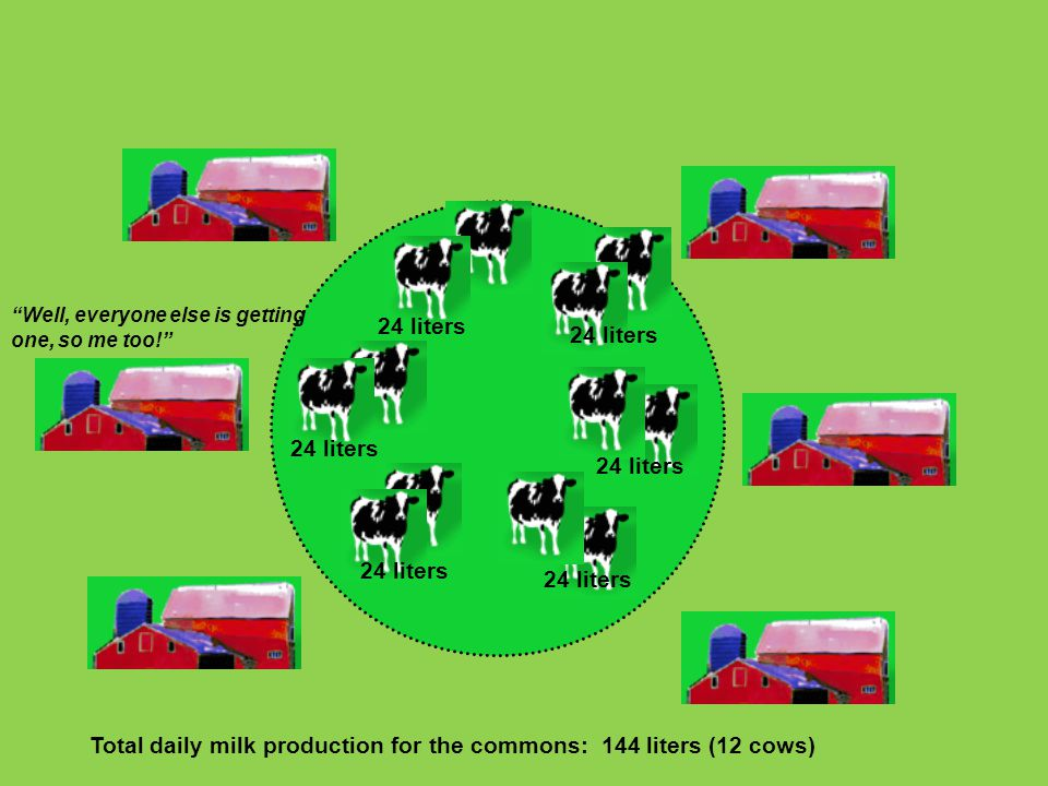 Total daily milk production for the commons: 144 liters (12 cows)