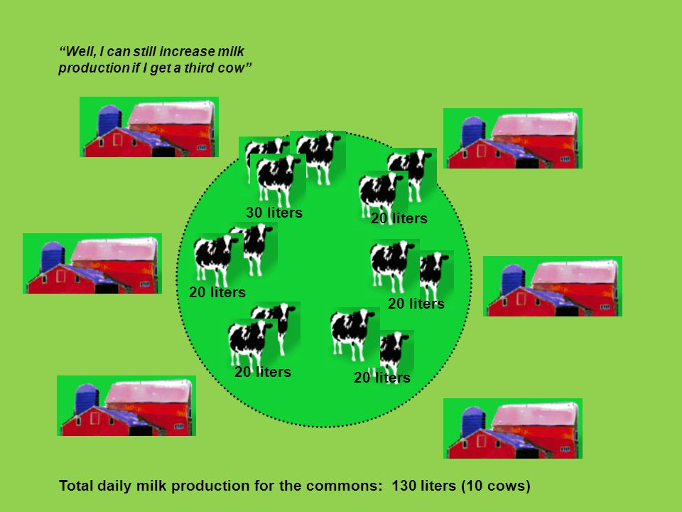 Total daily milk production for the commons: 130 liters (10 cows)