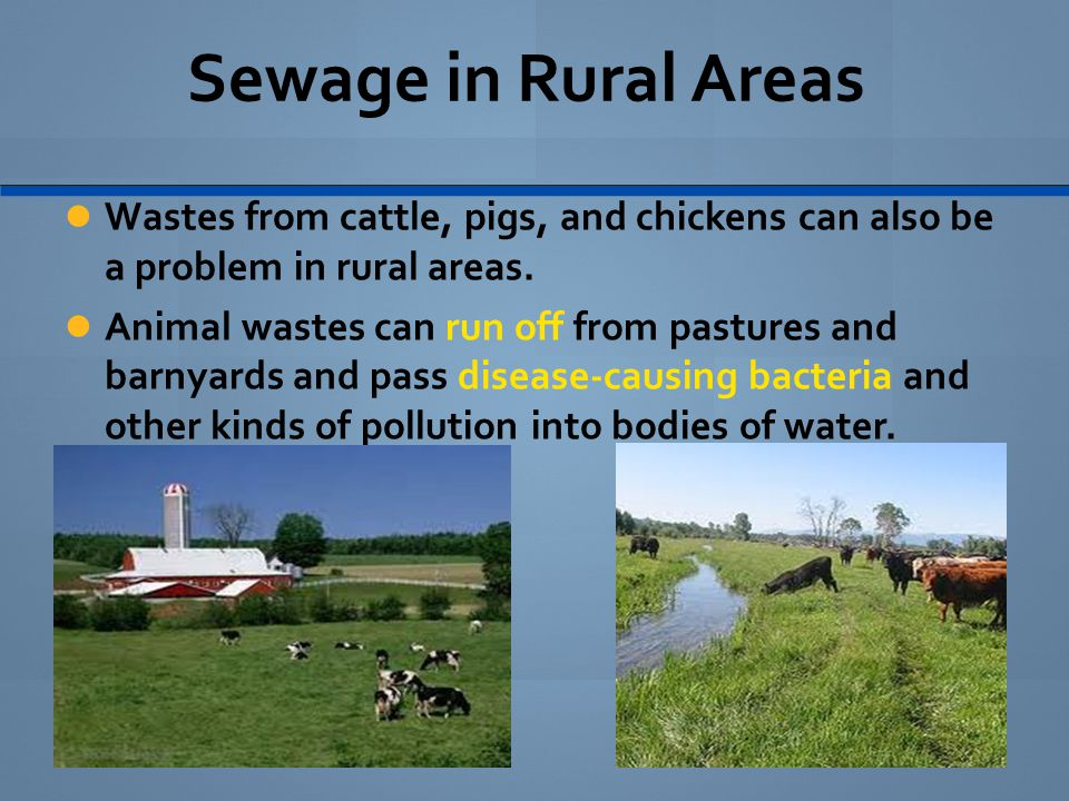 Sewage in Rural Areas Wastes from cattle, pigs, and chickens can also be a problem in rural areas.