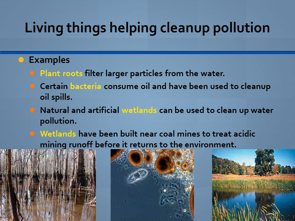 Living things helping cleanup pollution