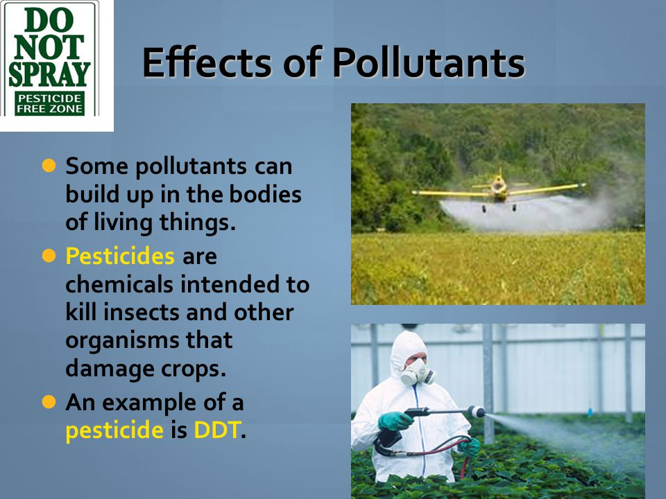 Effects of Pollutants Some pollutants can build up in the bodies of living things.