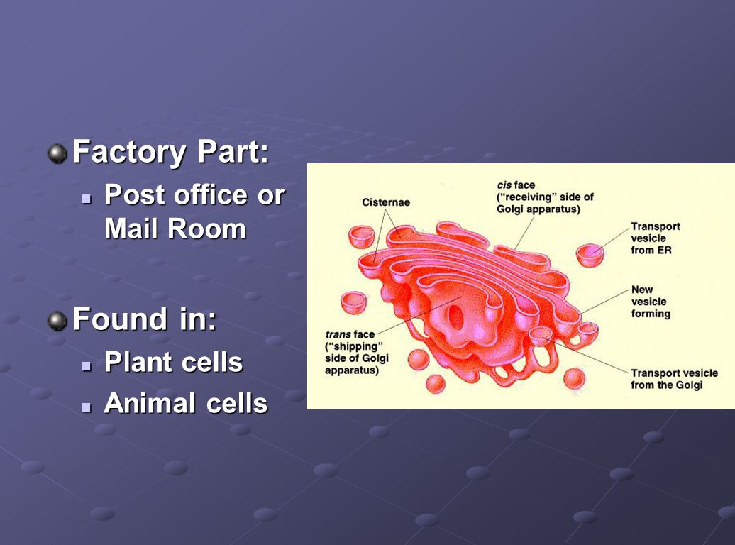 Factory Part: Found in: Post office or Mail Room Plant cells