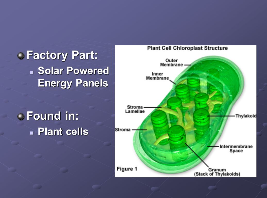 Factory Part: Solar Powered Energy Panels Found in: Plant cells