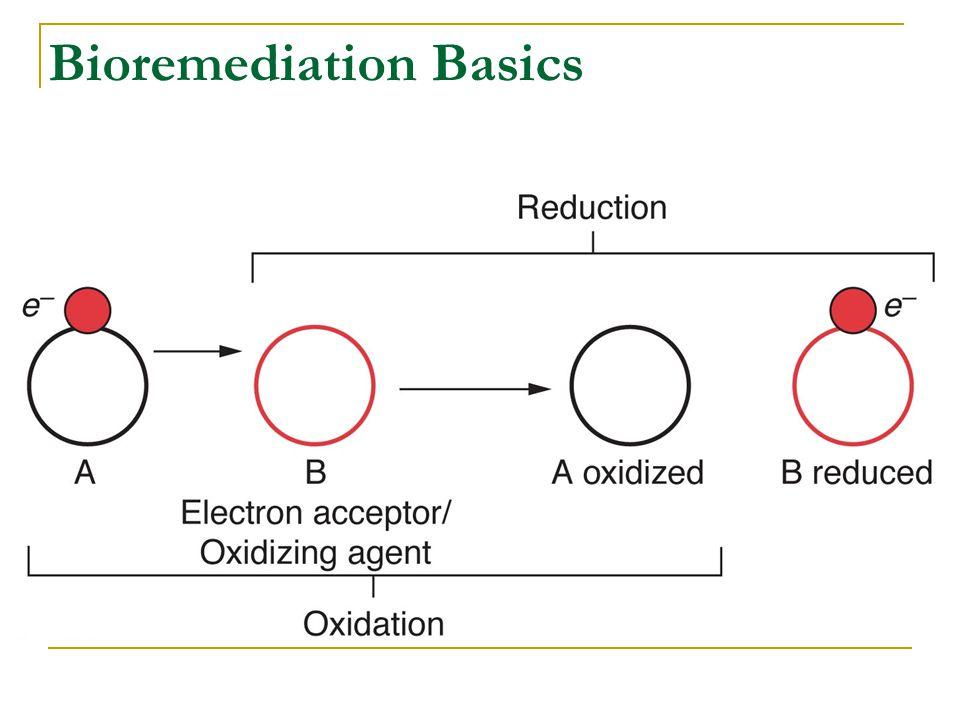 Bioremediation Basics