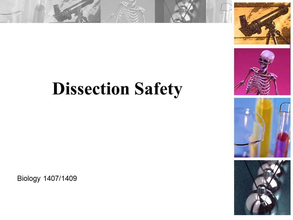 Dissection Safety Biology 1407/1409