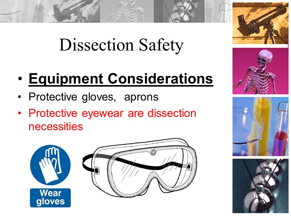 Dissection Safety Equipment Considerations Protective gloves, aprons