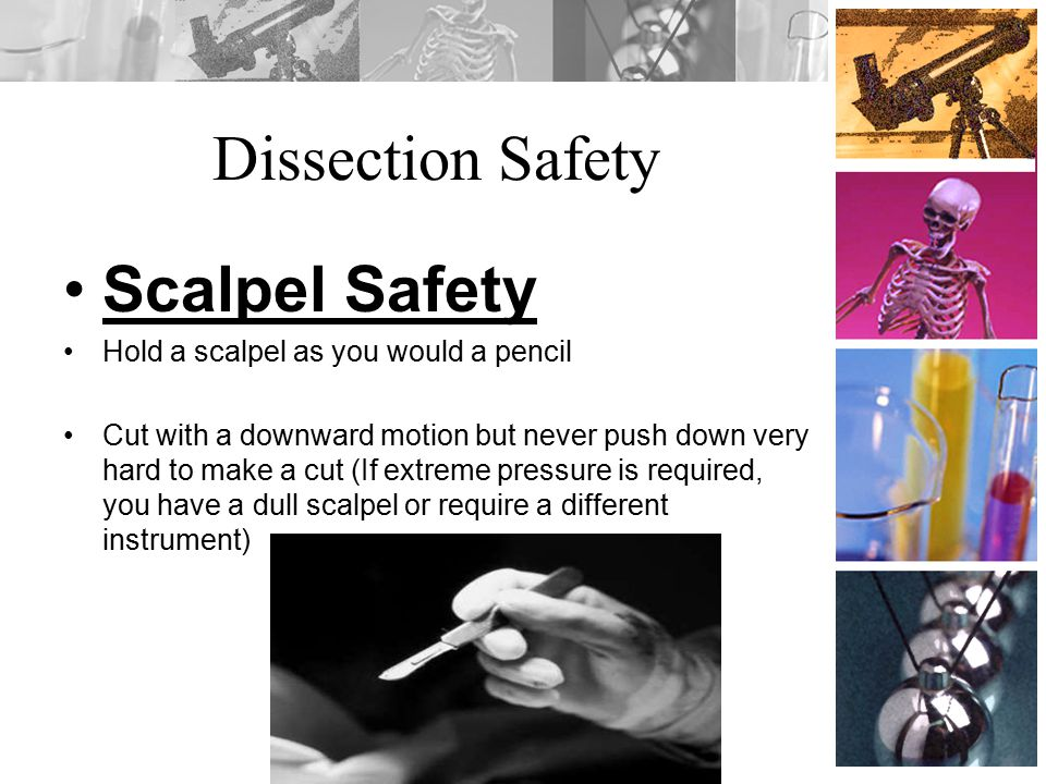 Dissection Safety Scalpel Safety Hold a scalpel as you would a pencil
