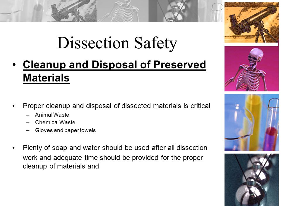 Dissection Safety Cleanup and Disposal of Preserved Materials