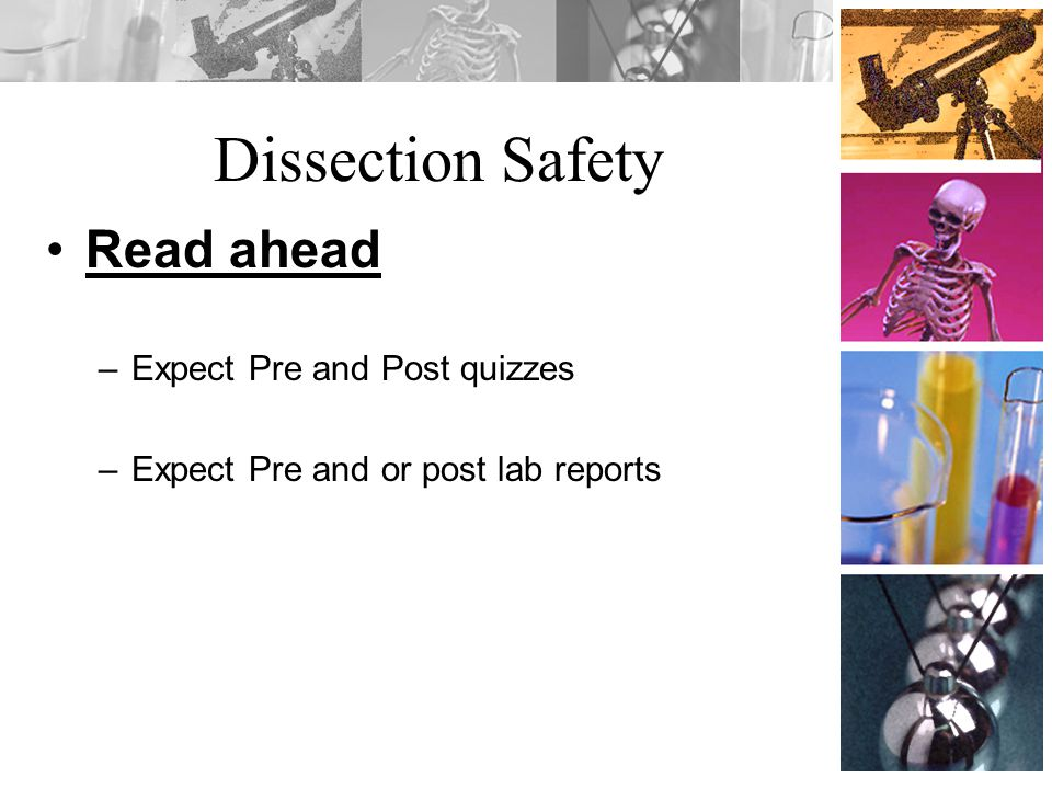Dissection Safety Read ahead Expect Pre and Post quizzes