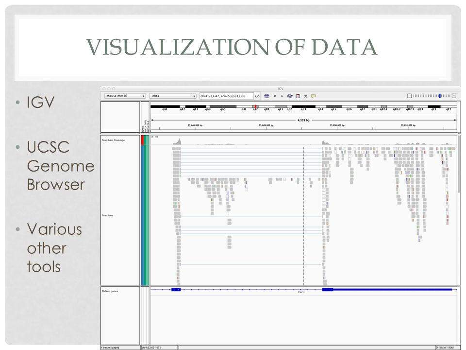 Visualization of Data IGV UCSC Genome Browser Various other tools