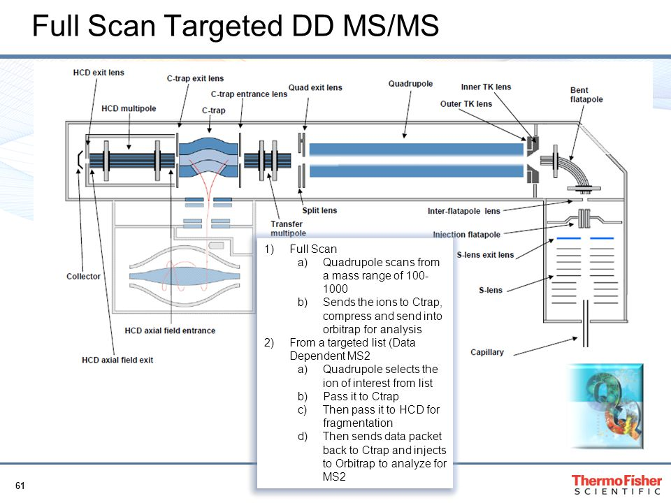 Full Scan Targeted DD MS/MS