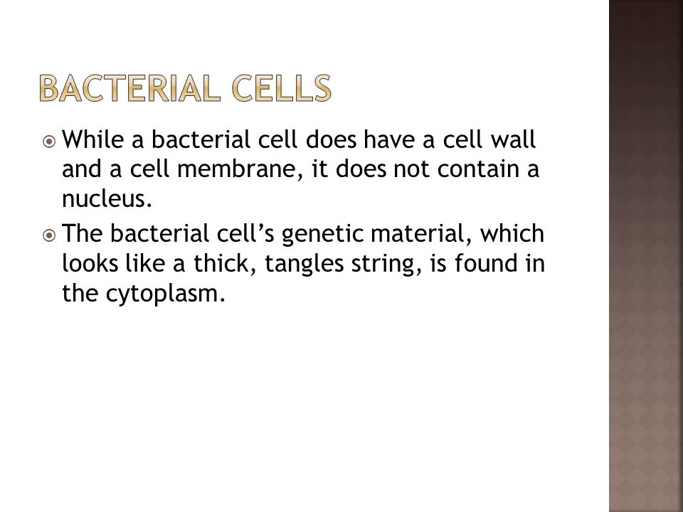 Bacterial Cells While a bacterial cell does have a cell wall and a cell membrane, it does not contain a nucleus.